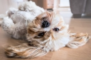Hund Progressive Muskelentspannung