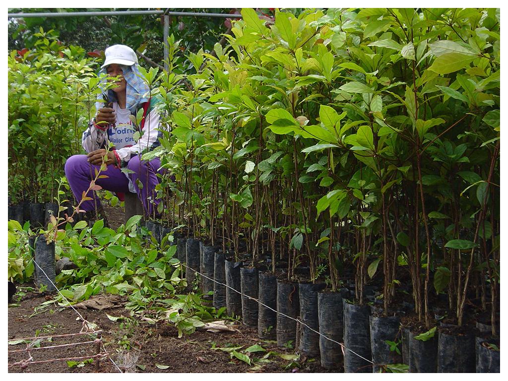 Nachhaltigkeit Panama1